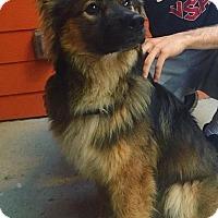 Adopt A Pet :: Drake - Austin, TX