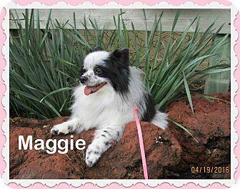 Pomeranian Dog for adoption in Shawnee Mission, Kansas - Maggie