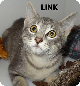 Domestic Shorthair Kitten for adoption in Lapeer, Michigan - MANY KITTENS!