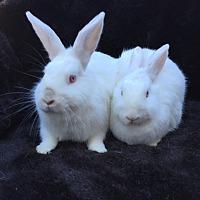 Adopt A Pet :: Phoebe & Luciana - Watauga, TX