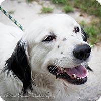 Adopt A Pet :: Snoopy - Daleville, AL