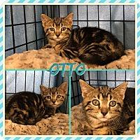 Adopt A Pet :: Otto - Jeffersonville, IN