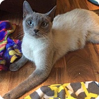 Adopt A Pet :: Katerina - Chicago, IL