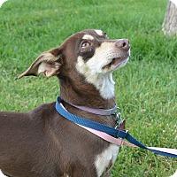 Adopt A Pet :: Jay Jay - Meridian, ID