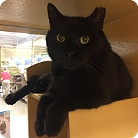 Adopt A Pet :: Harry - Worcester, MA