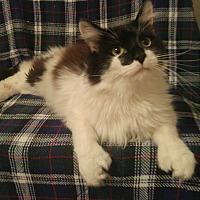 Adopt A Pet :: Jhu Jhu Bug - Winchester, CA