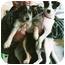 Photo 4 - Scottie, Scottish Terrier Mix Puppy for adoption in Lexington, Missouri - Bruce