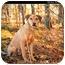 Photo 1 - Doberman Pinscher/Hound (Unknown Type) Mix Dog for adoption in Monroe, Georgia - Heidi