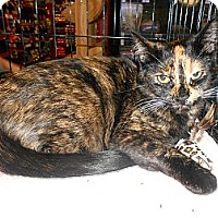 Adopt A Pet :: Sassy - College Station, TX