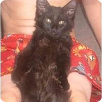 Adopt A Pet :: Salem - Bedford, MA