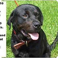 Adopt A Pet :: # 320-10 @ Animal Shelter - Zanesville, OH