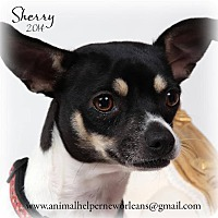 Adopt A Pet :: Sherry - New Orleans, LA