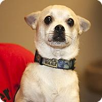 Adopt A Pet :: Nick - Gilbert, AZ