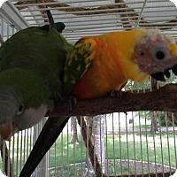 Adopt A Pet :: Moondrop - Punta Gorda, FL