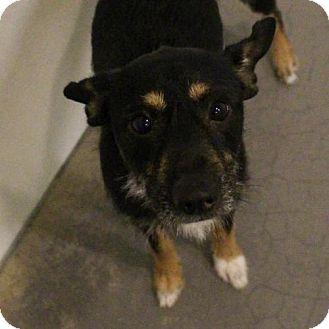 Terrier (Unknown Type, Medium) Mix Dog for adoption in Atlanta, Georgia - Wadsworth