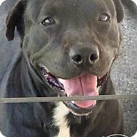 Adopt A Pet :: Kayda--RESCUED! - Marlinton, WV