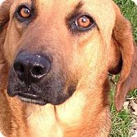 Adopt A Pet :: Ellie May - E. Greenwhich, RI