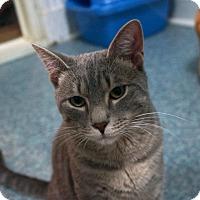 Adopt A Pet :: Smokey - New York, NY