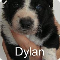 Adopt A Pet :: Dylan - Normandy, TN