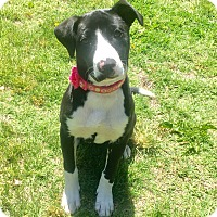Adopt A Pet :: *BLYTHE* - Weatherford, TX