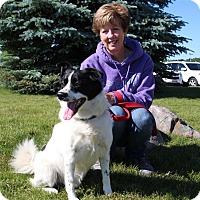 Adopt A Pet :: Brodhi - Elyria, OH