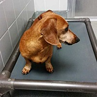 Adopt A Pet :: Prince - Albany, GA