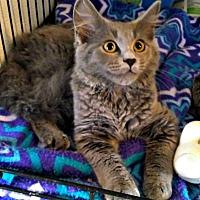Adopt A Pet :: Star - Jefferson, NC