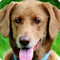 Adopt A Pet :: JAKE(OUR SMILING LAB--PLS READ - Wakefield, RI