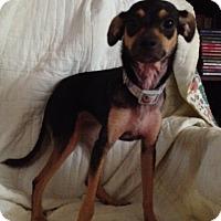 Adopt A Pet :: Hallie - Shannon, GA