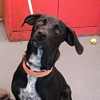 Adopt A Pet :: Santana - Aurora, IL
