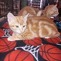 Adopt A Pet :: Maisy - Alamo, CA