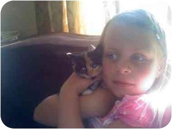 Calico Kitten for adoption in Point Pleasant, New Jersey - Cali