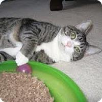 Adopt A Pet :: Lizzy - Arlington, VA