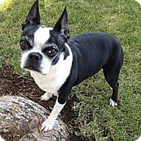 Adopt A Pet :: Ava Lynne - Lynnwood, WA