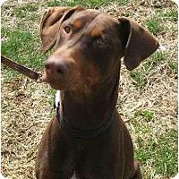 Adopt A Pet :: Killian--adopted!! - New Richmond, OH