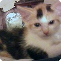 Adopt A Pet :: Elke - Jacksonville, FL