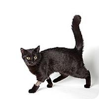 Adopt A Pet :: Dahlia - Rockaway, NJ