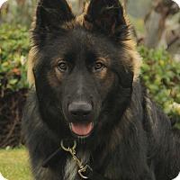 Adopt A Pet :: Luke - Laguna Niguel, CA