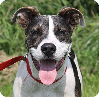 Hound (Unknown Type)/Terrier (Unknown Type, Medium) Mix Dog for adoption in Marietta, Ohio - Ryder (Neutered)