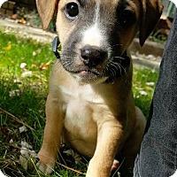 Adopt A Pet :: Bitsy - Atlanta, GA
