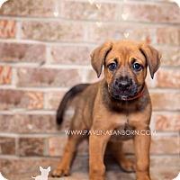 Adopt A Pet :: Tucker - Ormond Beach, FL