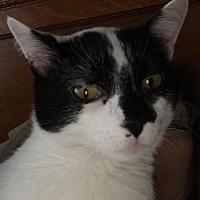 Adopt A Pet :: Peanut - Gilberts, IL