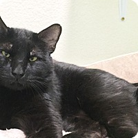 Adopt A Pet :: Zorro - Colorado Springs, CO