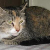 Adopt A Pet :: Olivia - Gary, IN