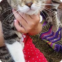 Adopt A Pet :: Junebug - Monterey, VA