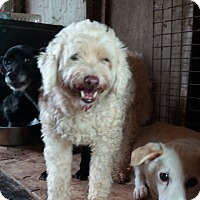 Adopt A Pet :: Pana - Oakton, VA