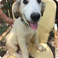 Adopt A Pet :: John-John - Whitewright, TX