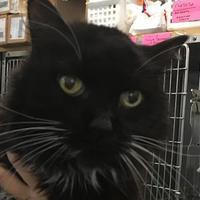 Adopt A Pet :: Pepper - Richmond, VA