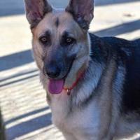 Adopt A Pet :: Jill - North Myrtle Beach, SC