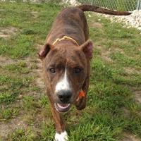 Adopt A Pet :: Rolly - Monticello, IA